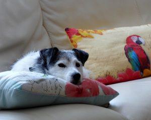 Read more about the article 5 coussins animaux pour décorer votre intérieur