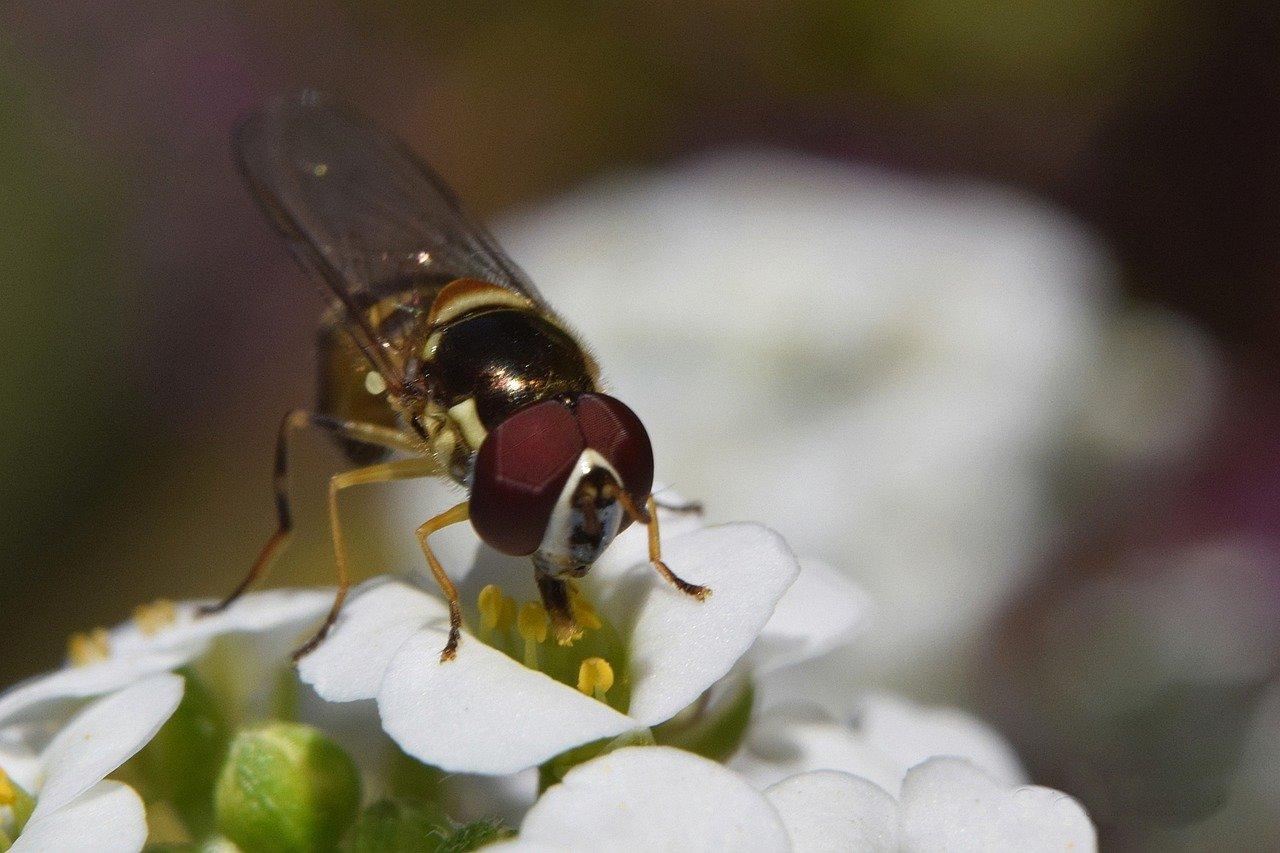 Read more about the article Comment se débarrasser des moustiques dans son jardin ?